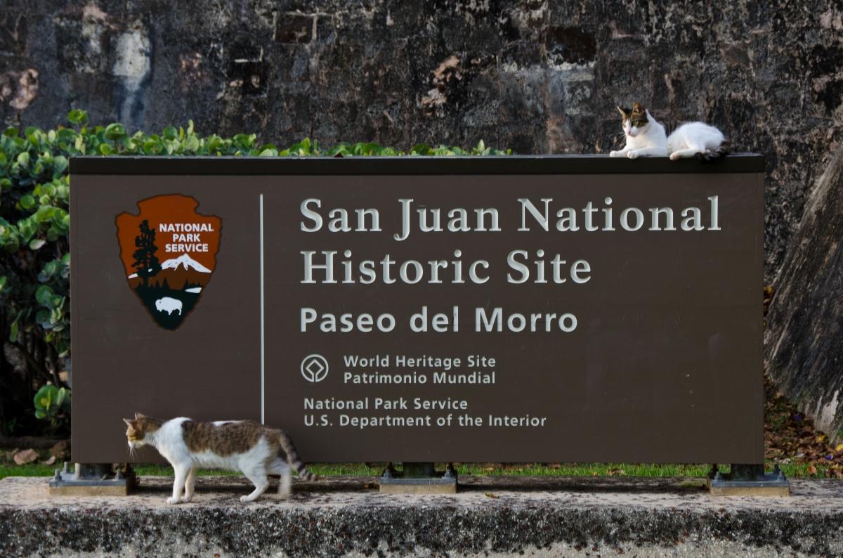 Paseo del Morro cats, Old San Juan, Puerto Rico