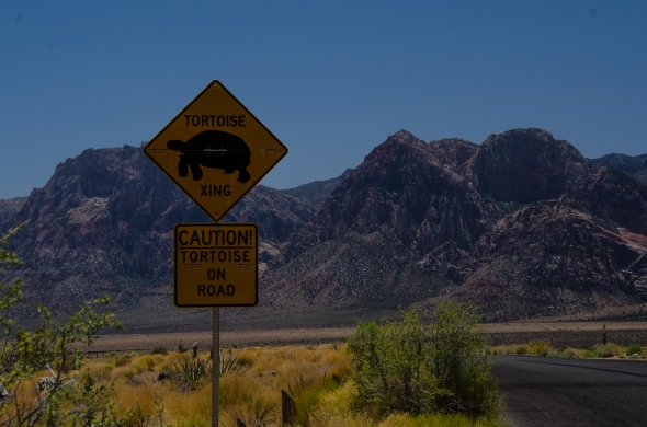 Red Rock Canyon, tortoise crossing