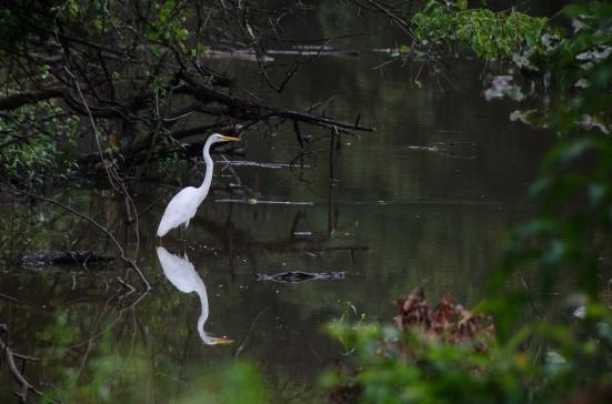 Birds of the Kenilworth Aquatic Gardens, Washington, DC