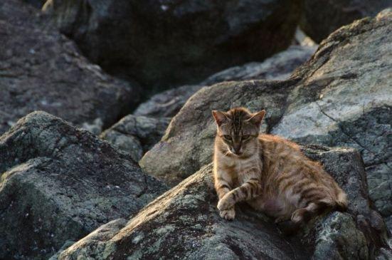 Cats in Old San Juan, Paseo del Morro, Puerto Rico