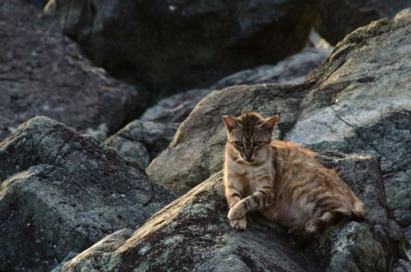 A cat, lounging on warm rocks by Paseo del Morro, San Juan, Puerto Rico