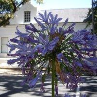A Morning in Stellenbosch: A Walk around Town