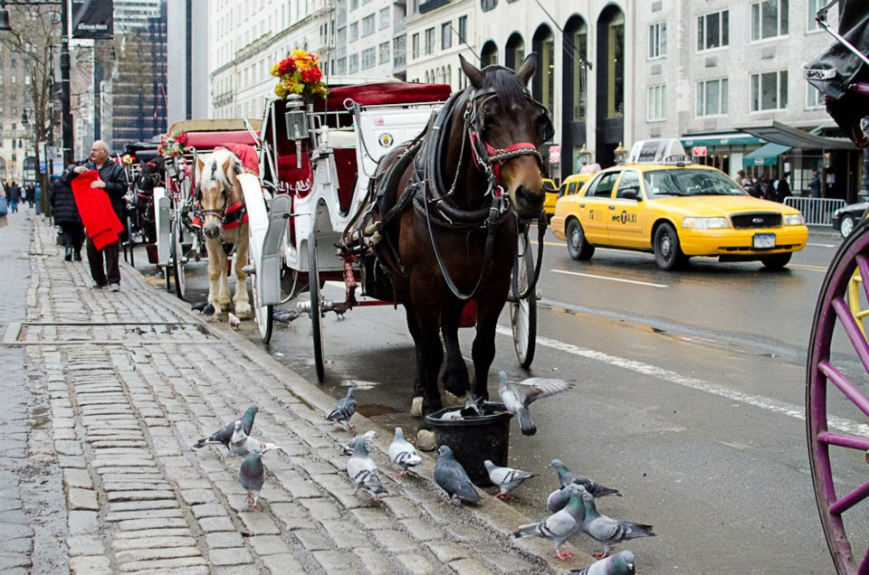 Horses by the New York City's Central Park