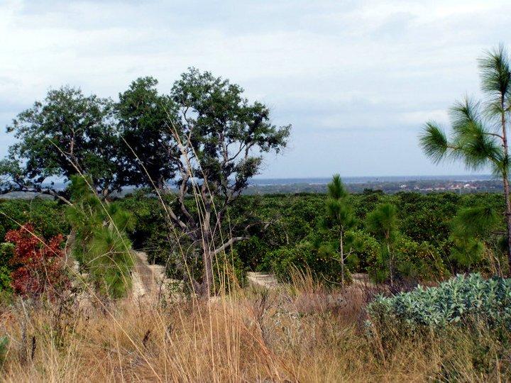 A Floridian Mountain view, Bok Tower Gardens