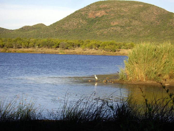 Mokolodi lake: not a hippo in sight