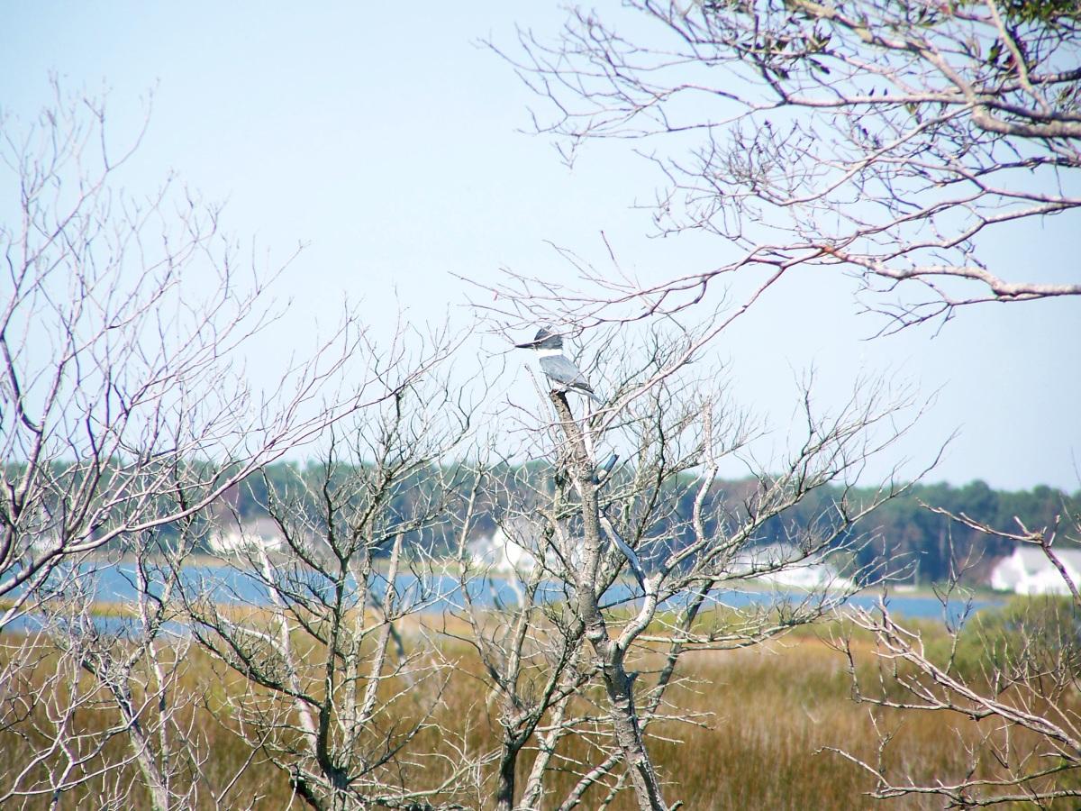 Assateague's birds