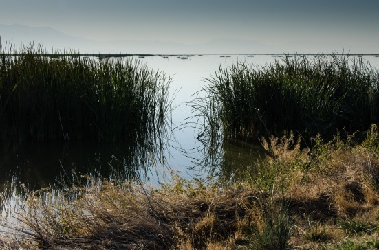 Bear River Migratory Bird Refuge in September