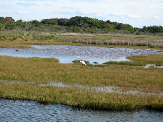 Assateague shore birds