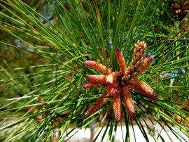 Assateague Island flora
