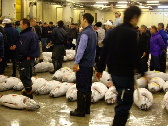 Tuna auction at Tsukiji Fish Market, Tokyo