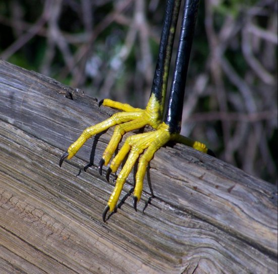 Bird feet, Gatorland