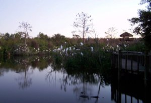 Evening at Breeding Marsh, Gatorland