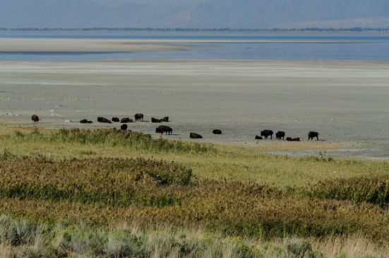 Bison beach, Antelope Island State Park