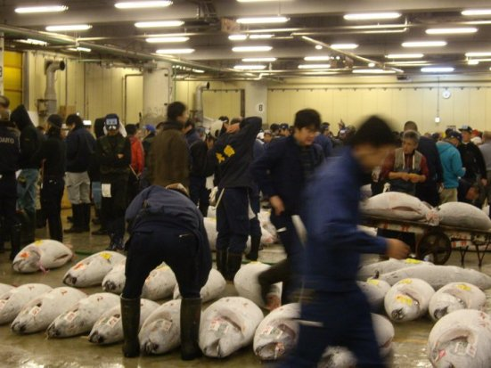 Chaos at Tsukiji Fish Market Tuna Auction, Tokyo