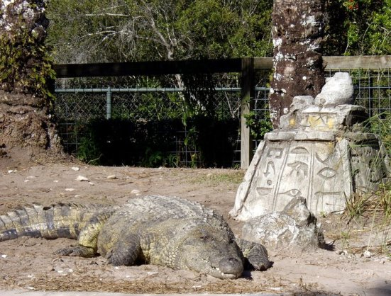 Nile crocodile, Gatorland, FL