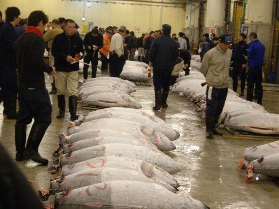 Tuna rows, Tsukiji Fish Market, Tokyo