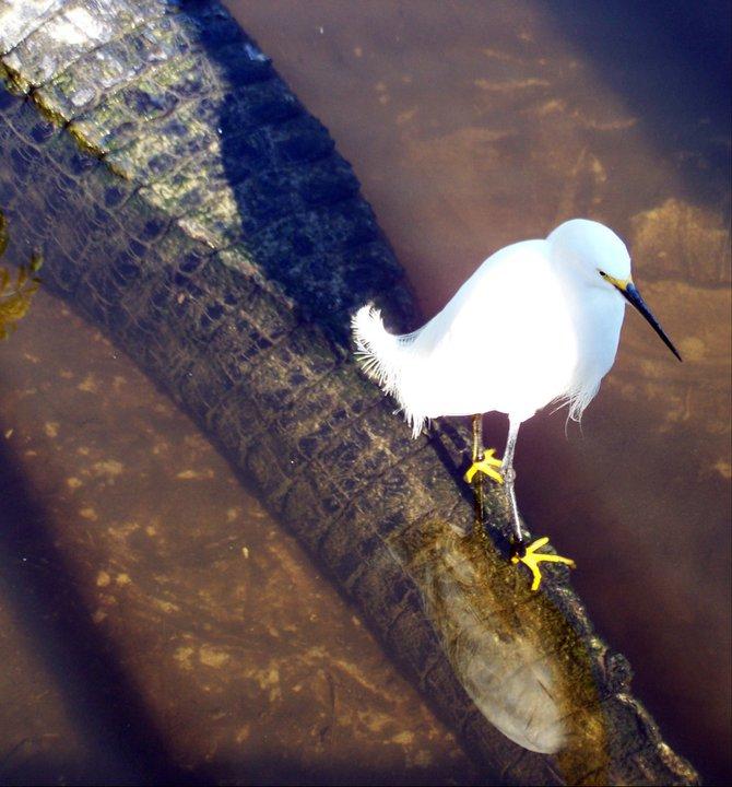 Wandering the plank, Gatorland, Florida