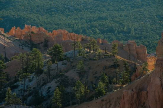 Bryce Canyon sunrise - forests aglow