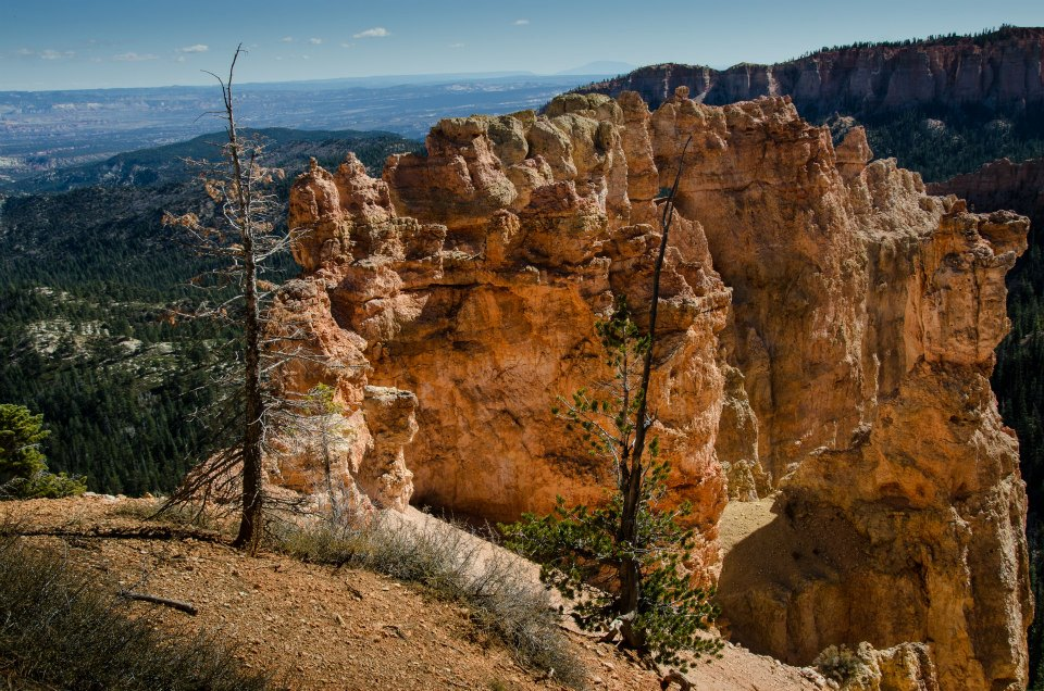 Bryce Canyon trees
