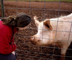 Hamlet the Pig at Poplar Spring Animal Sanctuary