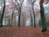 A Walk in the Woods:  Rijster Bosch,Netherlands