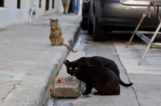 Dinnertime for Old San Juan cats, Puerto Rico