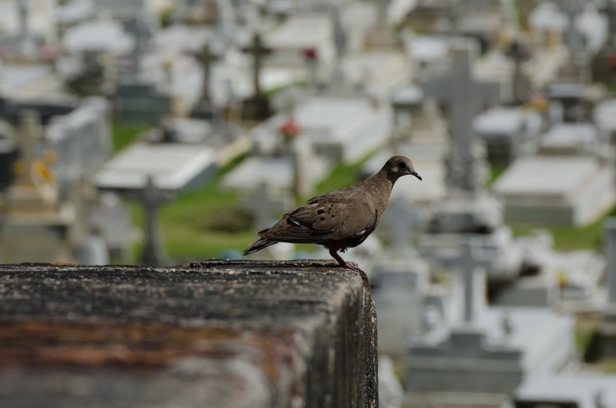 Santa María Magdalena de Pazzis Cemetery, Puerto Rico