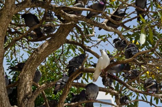 Birds in trees, Parque de las Palomas, San Juan, Puerto Rico