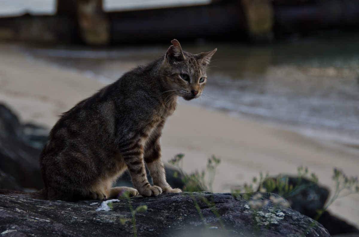 Save a Gato cat in Paseo del Morro, Puerto Rico