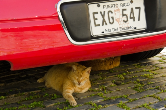 Cat lounging under car in San Juan, Puerto Rico