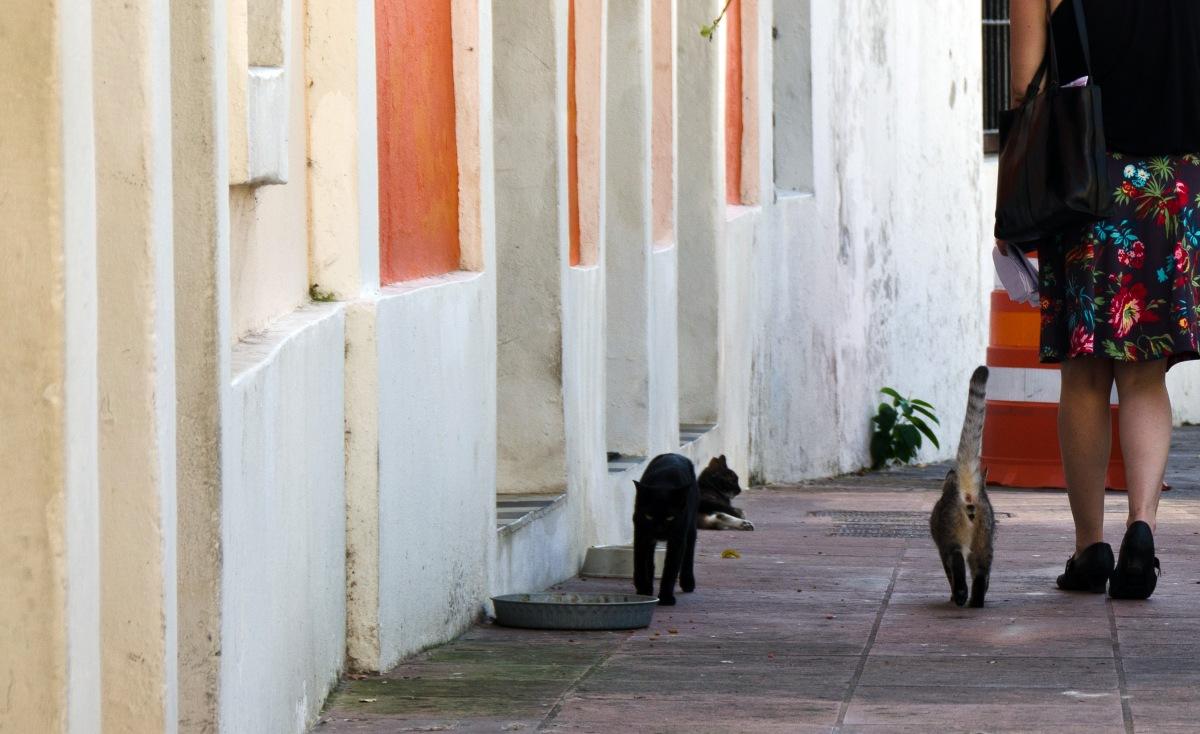 Cats, San Juan, Puerto Rico