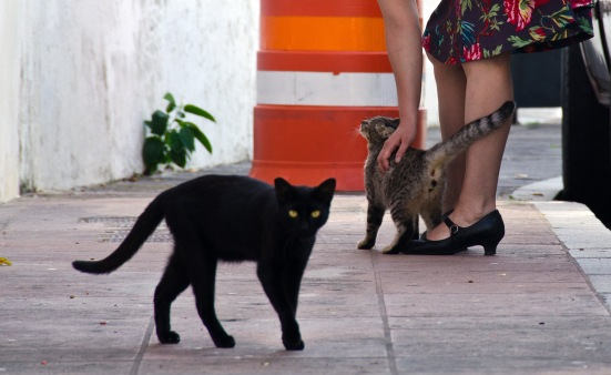 Friendly cat, San Juan, Puerto Rico
