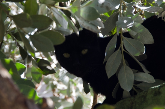 Black cat in San Juan, Puerto Rico