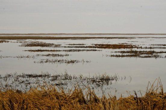 Bear River Migratory Bird Refuge - endlessness