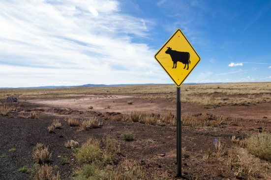 Cow country, near Meteor Crater, Arizona