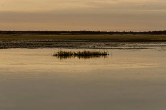 Dusk at Bear River Migratory Bird Refuge in February