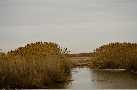 Flora of the Bear River Migratory Bird Refuge in winter - tall grass