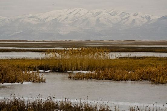 Marshy landscape and mountains at the Bear River Migratory Bird Refuge in winter