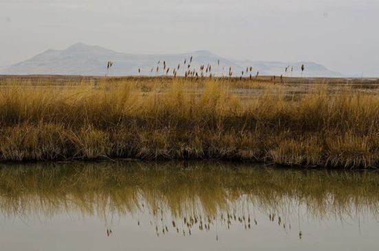 Soft reflections - Bear River