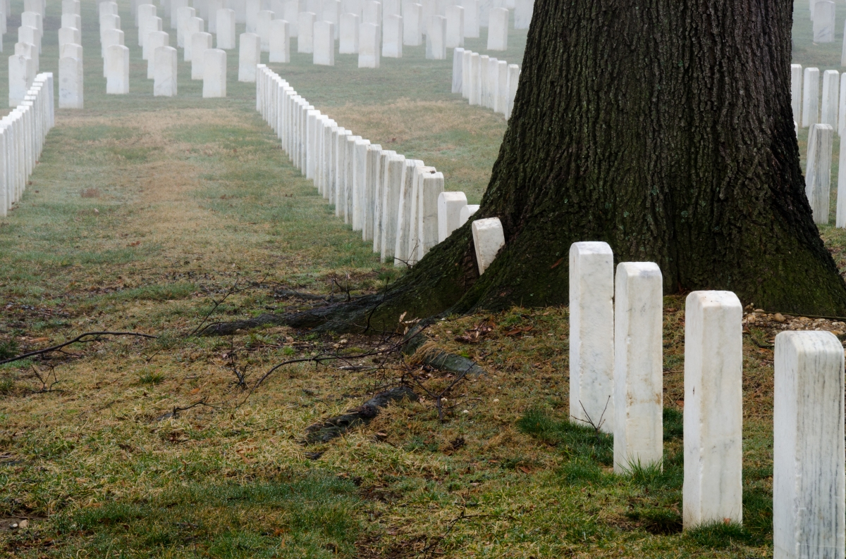 US National Cemetery, a tree growing over the graves