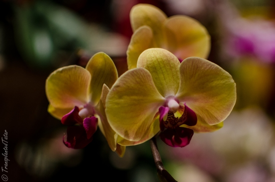 Orchids of Latin America - National Museum of Natural History