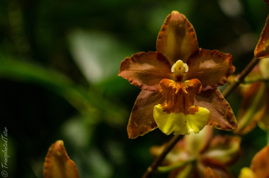 Orchids of Latin America, Natural History Museum, DC