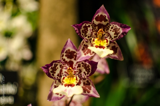 Orchids in Latin America, Museum of Natural History, DC