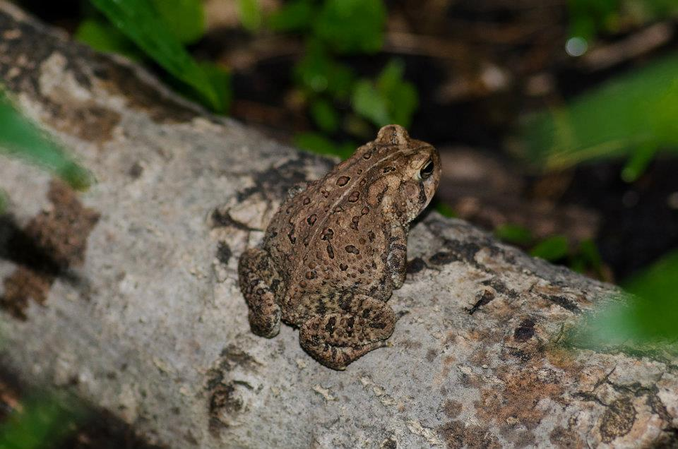 May - toad in the garden