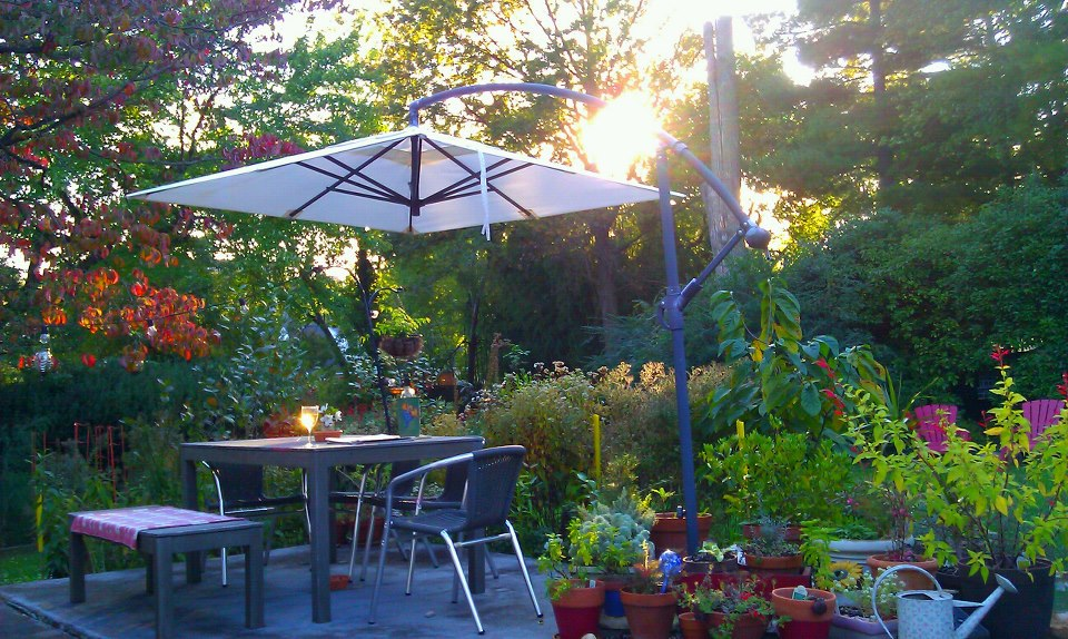 My garden before sunset
