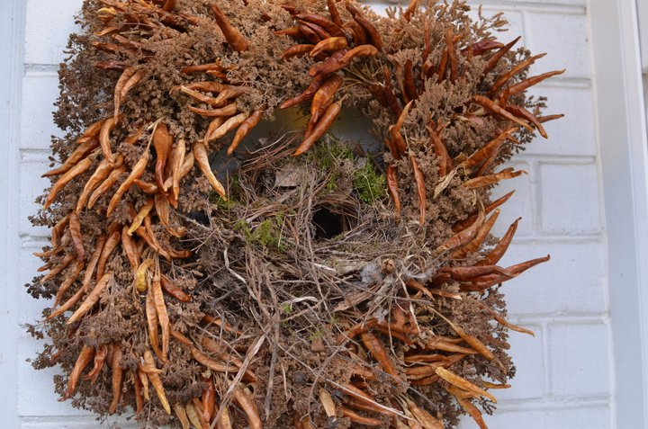 March - Carolina wren nest in a wreath by our front door