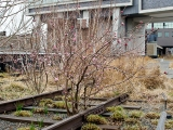 Spring on The High Line