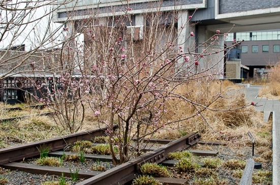 A bush blooms on The High Line, New York City