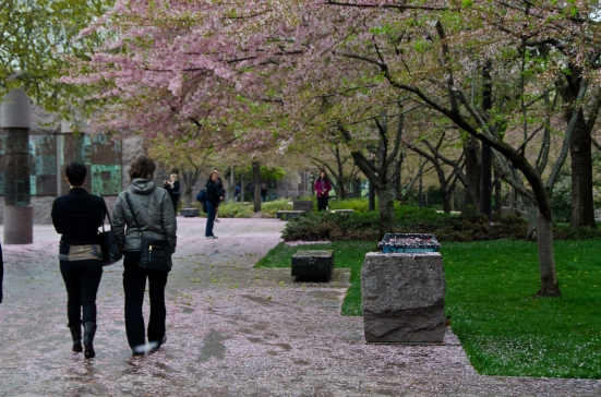 Walking by the Franklin Delano Roosevelt Memorial, fallen cherry blossoms, Washington DC