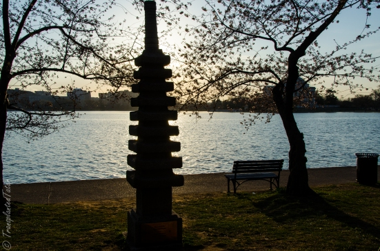 The Japanese Pagoda at sunrise, Tidal Basin